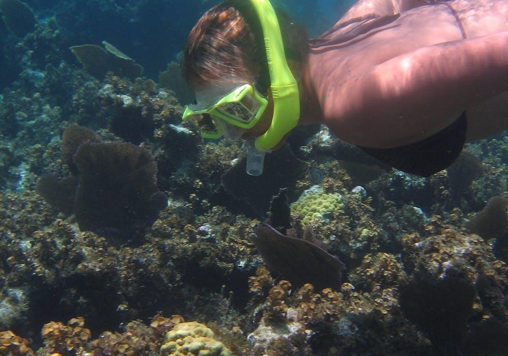 28 Swim With Sea Turtles