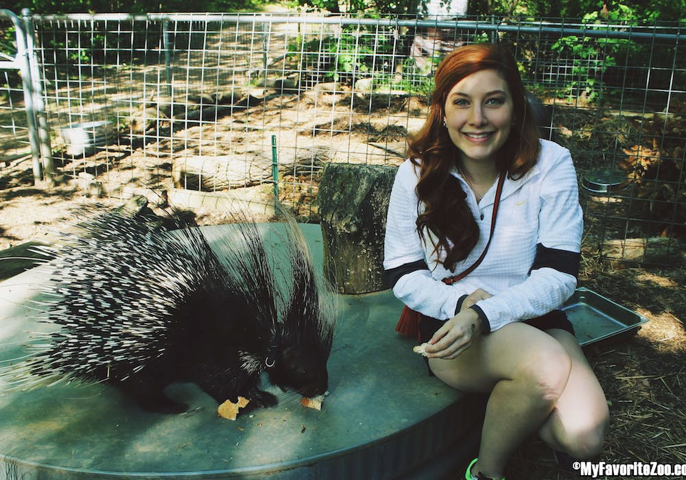 African-Crested-Porcupine-5.3.14-Wild-Animal-Encounter-9
