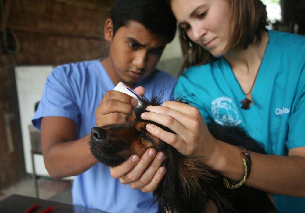 Broadreach Costa Rica Vet Medicine 4