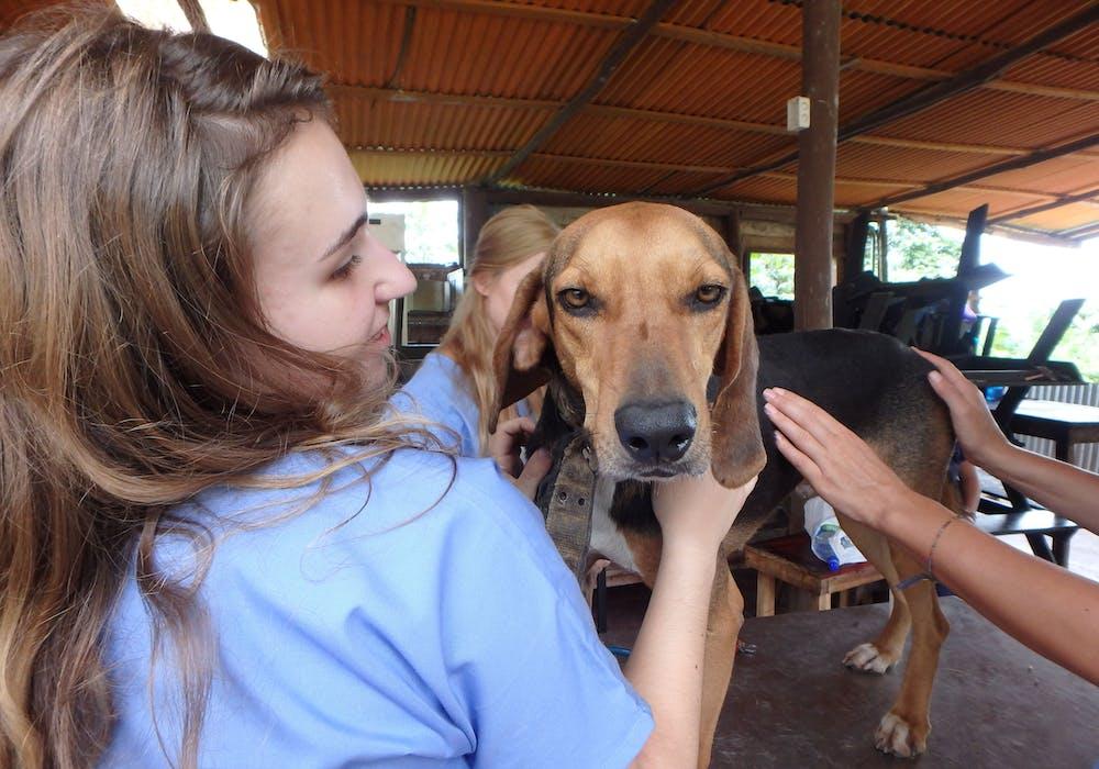 Broadreach Costa Rica Vet Medicine 6