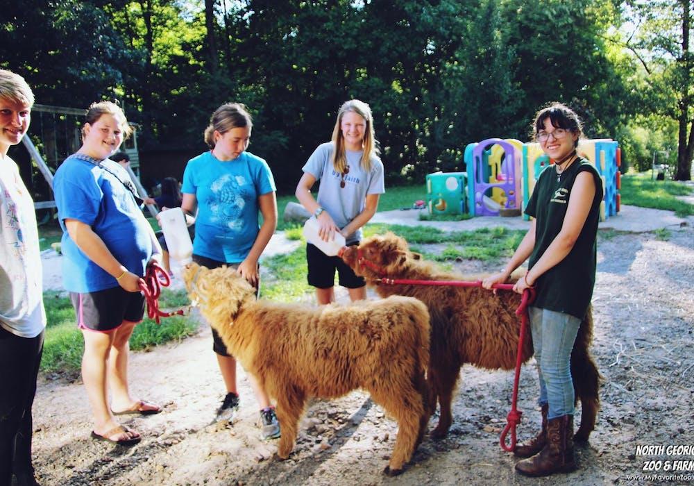 Calf Feeding Overnight Teen Camp 16 2