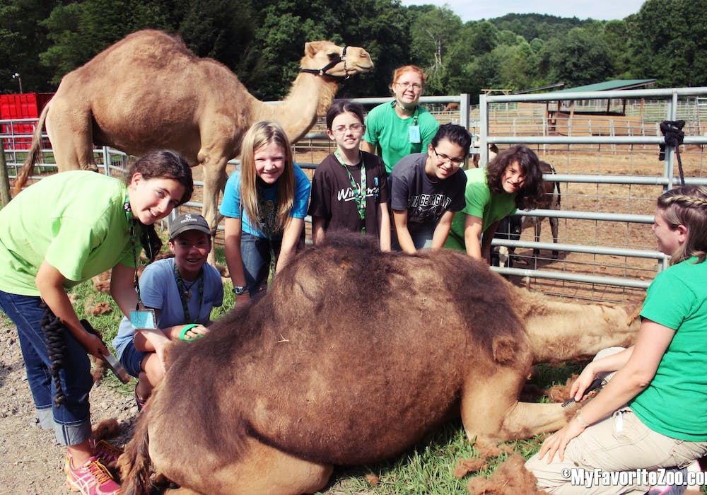 Camel-Encounter-Overnight-Teen-Camp-2015-9