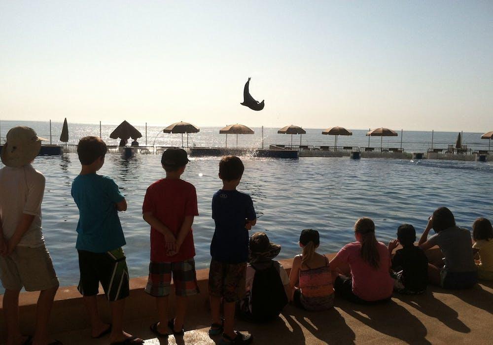 Dolphin-flip-camp