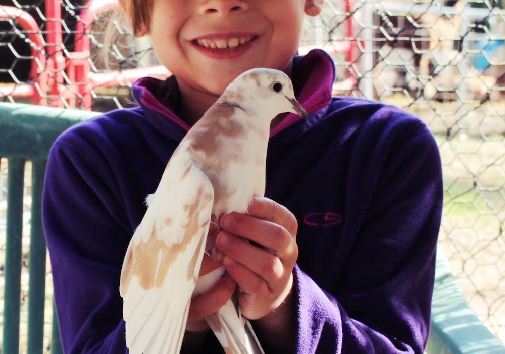 Pigeon-Wilson-JR.-Shadow-a-Zookeeper-11.13-95