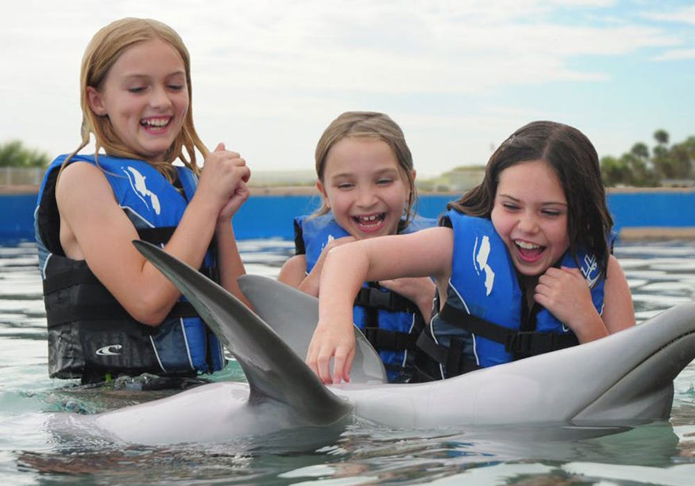 Touching-a-dolphin