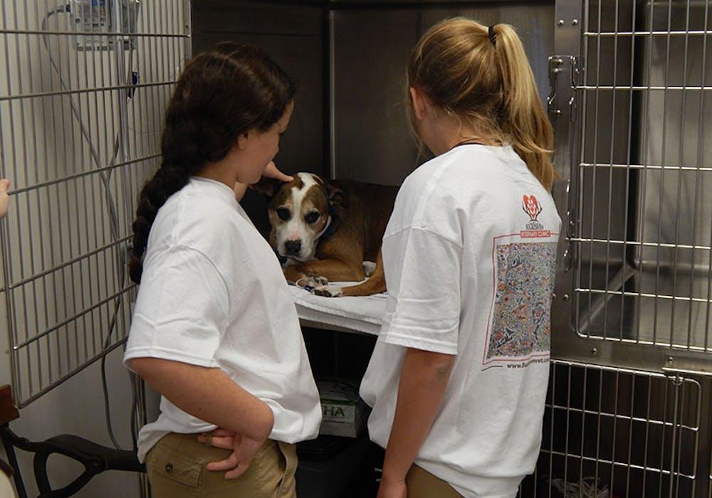Veterinary-Career-Day-1