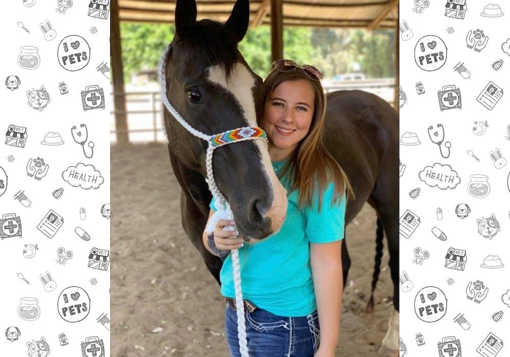 Volunteer Winward Equine