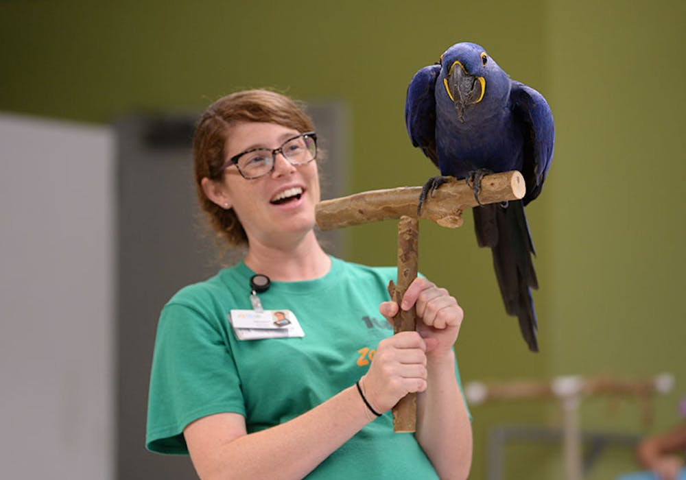 educator-macaw-gallery-web