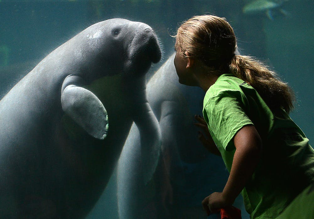 florida-boardwalk-manatee-and-zoo-school-student-aug-14-2014