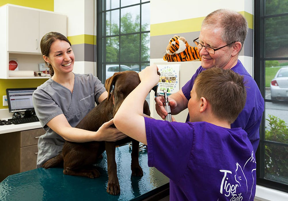 veterinarian-camper-ear-exam-dog-web