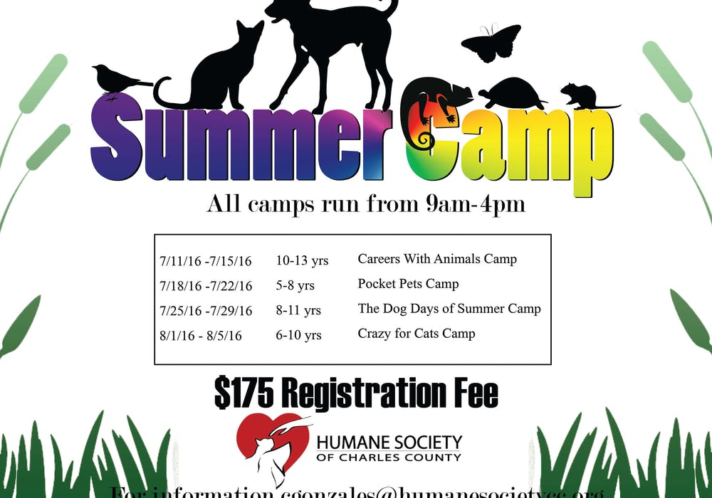 webpage-HSCC-Summer-camp-flyer 2