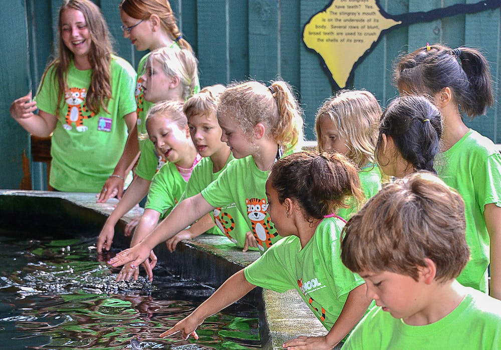 zoo-school-stingray-bay-73013-re-crop